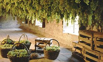 zonin-wines-veneto-30738